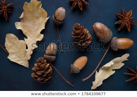 Autunno ghianda rosolare foglie pomeriggio Foto d'archivio © ondrej83