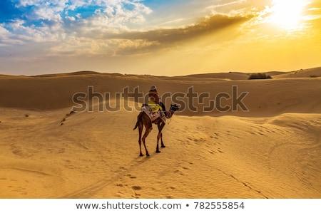 Camel in Thar desert Stock photo © ErickN