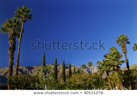 Fan Palms Trees Mountains Palm Springs California Stock photo © billperry