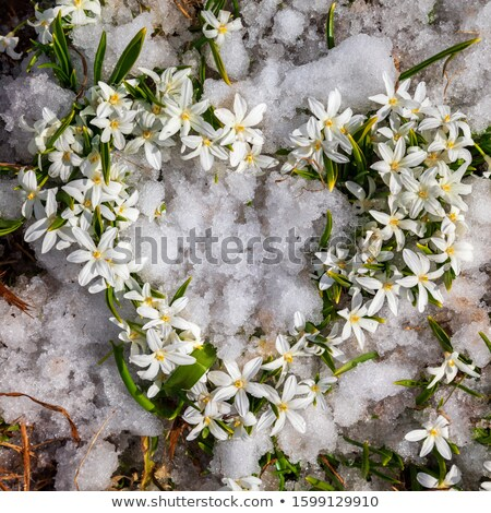 monte · flores · com · sombra · lugar · primavera · natureza - foto stock © dedmorozz