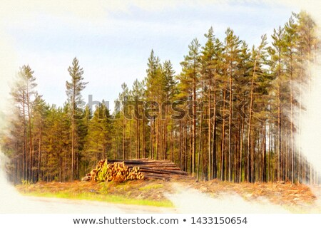 Forest clearing, pile of logs laid. Stock photo © justinb