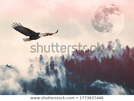 bald eagle in flight out stock photo © searagen