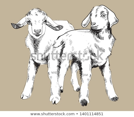 Sketch cute goat head in vintage style Stock photo © kali