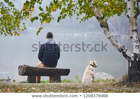 задумчивый осень пруд красивой осень Сток-фото © lypnyk2