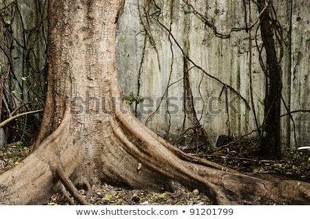 Zdjęcia stock: Leaves In Autumn At The Ground With Old Tree Stump