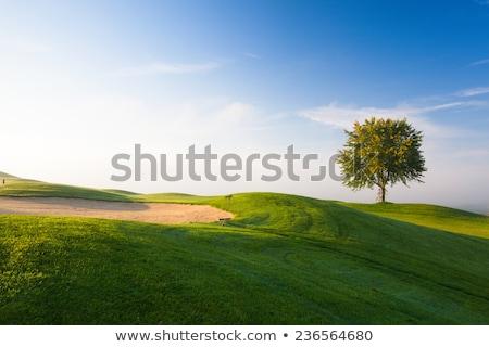 mistig · ochtend · lege · golfbaan · boom · golf - stockfoto © capturelight
