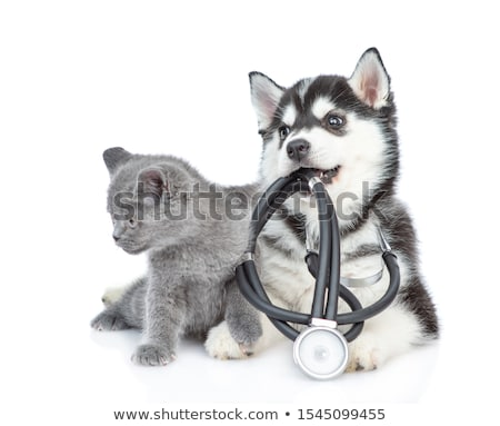 doctor and a British cat on white background stock photo © dadoodas