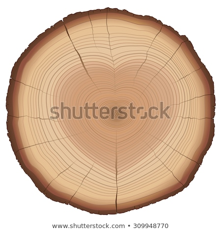 Seção transversal forma de coração textura madeira floresta Foto stock © m_pavlov