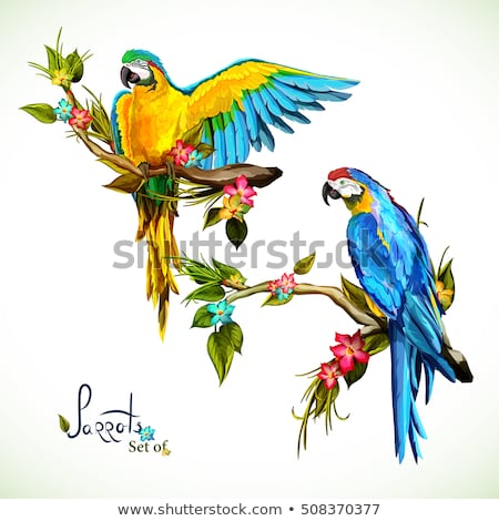 Vector illustration of blue parrot macaw. Colorful hand-drawing  Stock photo © artibelka