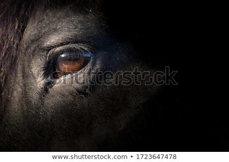 馬 眼 クローズアップ 細部 髪 黒 ストックフォト © compuinfoto