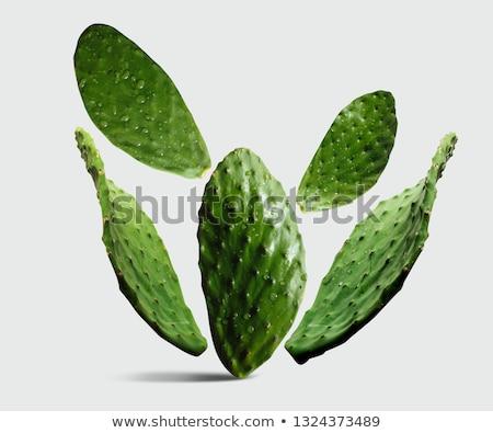 agave · cacto · pormenor · planta · mediterrânico - foto stock © michaklootwijk