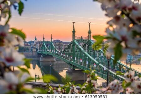 ponte · Budapeste · mudança · lente · cidade · noite - foto stock © csakisti