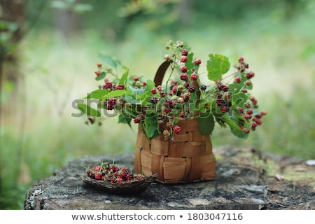 Ripe garden berries Stock photo © Makse