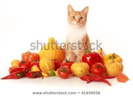 кошки · острый · зрение · глаза · волос · фон - Сток-фото © nailiaschwarz