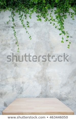 Green ivy on concrete wall Stock photo © pakete