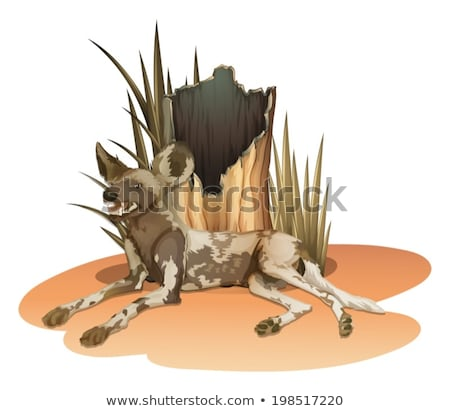 Sauvage chien illustration herbe forêt fond Photo stock © bluering