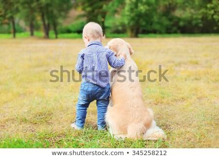 Dois belo família cães dourado verão Foto stock © goroshnikova