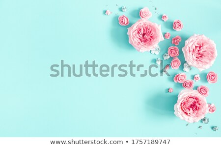 Eight of pink roses Stock photo © blackmoon979