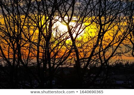 Naranja nubes invierno puesta de sol desnudo árbol Foto stock © stevanovicigor