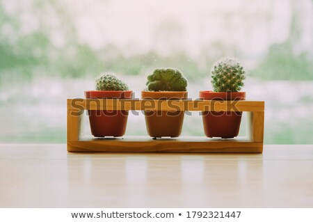different types of plants in pots stock photo © bluering