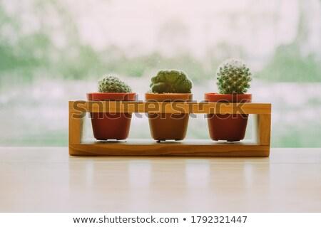 farklı · tür · bitkiler · yeşil · beyaz · yaprak - stok fotoğraf © bluering