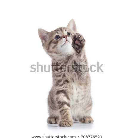 Sweet baby over grey white background Stock photo © Anna_Om