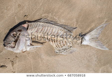 Stock photo: fish bone, bones, corpse, skin and bone, dead, deceased, washed up, drying out, dry, dehydrated, bri