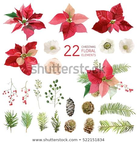 Establecer Navidad flores aislado blanco dibujado a mano Foto stock © frescomovie