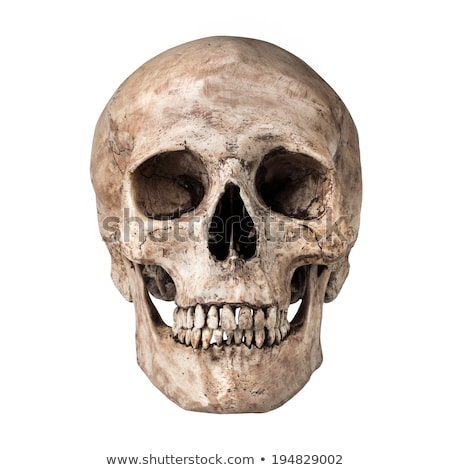 human skull isolated on white background stock photo © rogistok