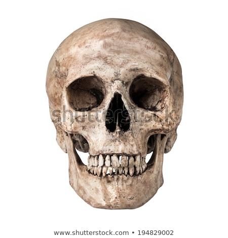 human skull isolated on white background Stock photo © rogistok