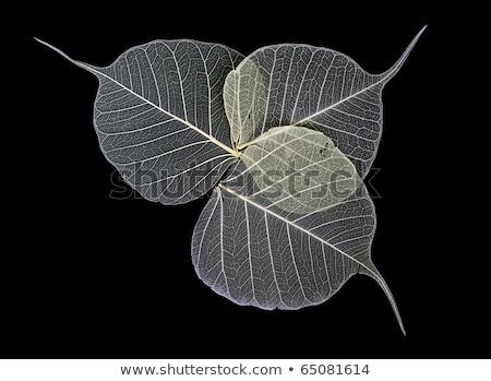 skeleton leaves flower composition on black background stock photo © rufous