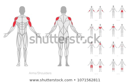 Chest and abdomen muscles icon Stock photo © Tefi