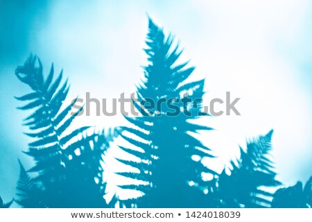 Réflexion ombre fougère branche bleu espace de copie Photo stock © artjazz