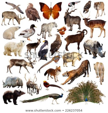 Set of isolated animals Stock photo © bluering
