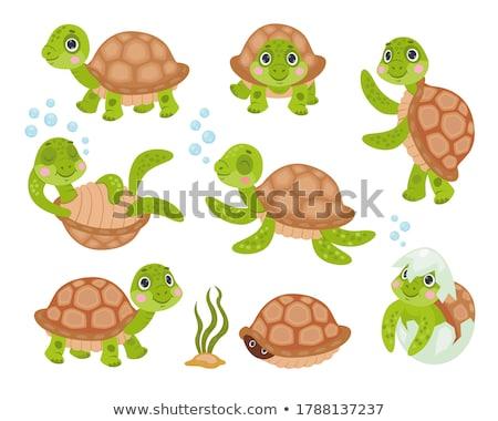 Aranyos teknős teknősbéka állat karakter rajz Stock fotó © izakowski
