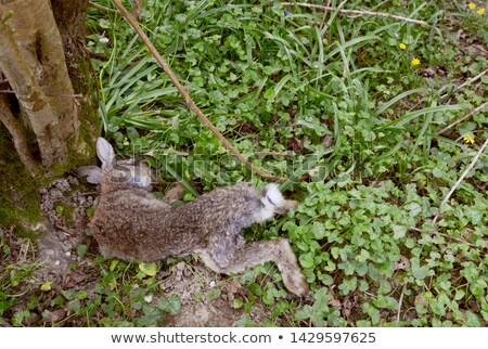 Muertos conejo pie árbol Foto stock © sarahdoow