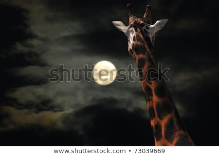 Giraffe staren maan nacht hemel wolken Stockfoto © jamdesign