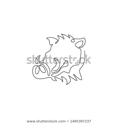 Porco cabeça linha ilustração porco Foto stock © patrimonio