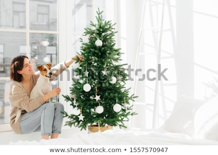 Morning before Chtistmas. Merry delighted woman sits on windowsill with pedigree jack russell terrie Stock photo © vkstudio