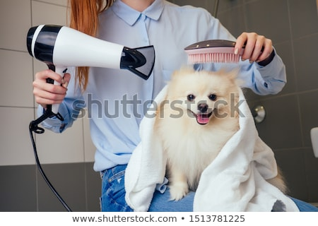 Dog at  a barbershop Stock photo © joyr
