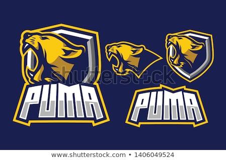 Pantera mascota cabeza vector gráfico imagen Foto stock © chromaco