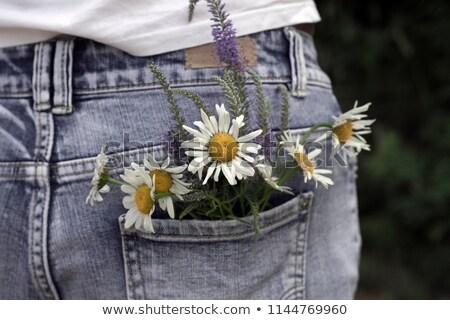 Daisy kwiat niebieski powrót studio Zdjęcia stock © prill