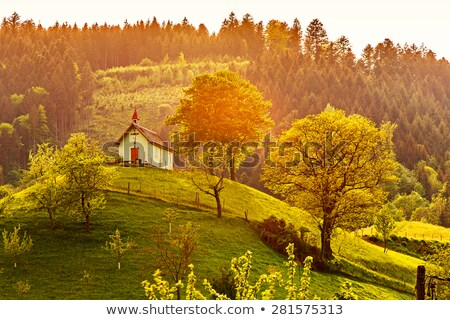 Black Forest scenery at summer time Stock photo © prill