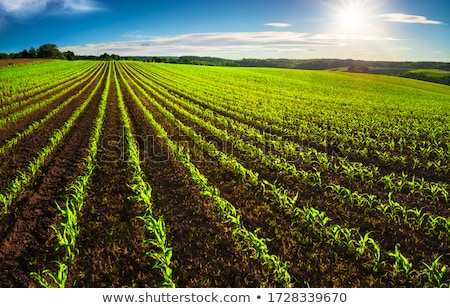 Agricultural land Stock photo © deyangeorgiev