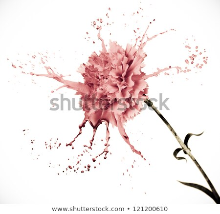 rózsaszín · virág · csobbanások · fényes · virág · rózsaszín · fekete - stock fotó © zdenkam