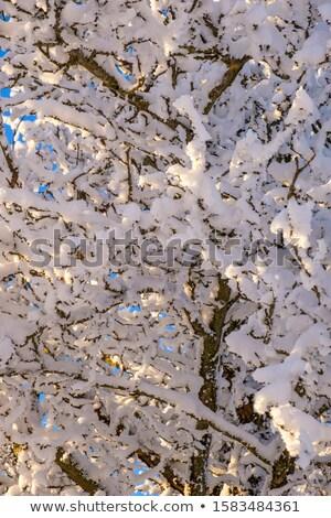 Ramita completo rima invierno corto Foto stock © taviphoto