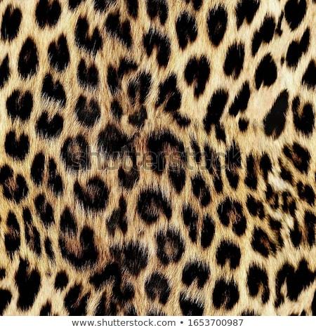 Gepárd szőr textúra macska terv háttér Stock fotó © KMWPhotography