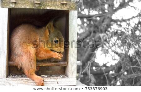 Primo piano guardando fotocamera legno verde animale Foto d'archivio © aetb