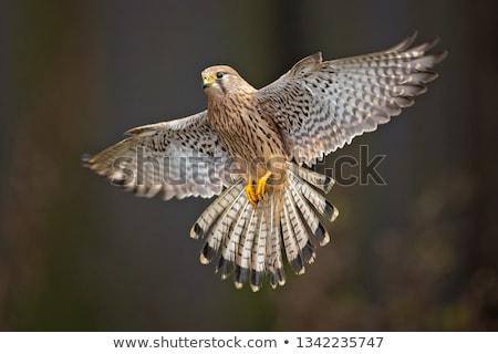 drót · néz · étel · természet · szín · szárny - stock fotó © chris2766