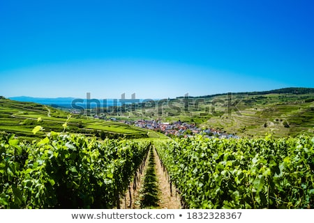 vineyards under the hill Stock photo © Kayco